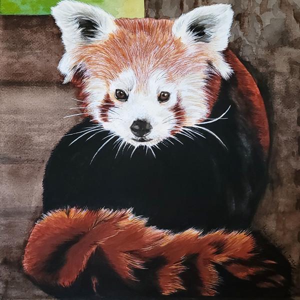 Red Panda by HEIDI KIDD