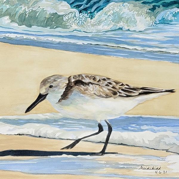 Sand piper at sea by HEIDI KIDD
