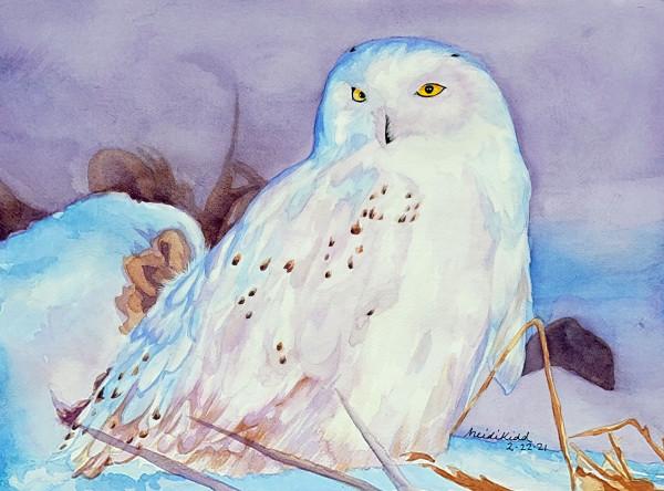 Snowy Owl in Winter by HEIDI KIDD