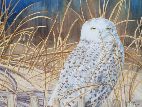 Snowy Owl by HEIDI KIDD