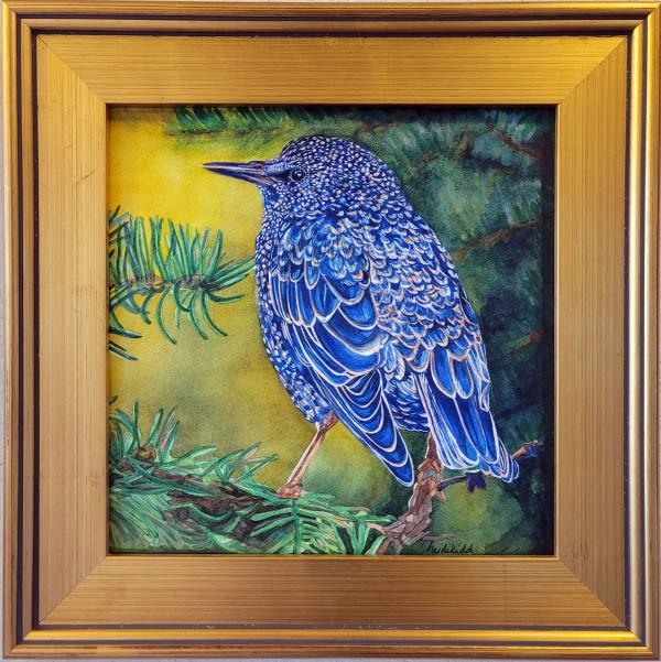Starling in Autumn by HEIDI KIDD