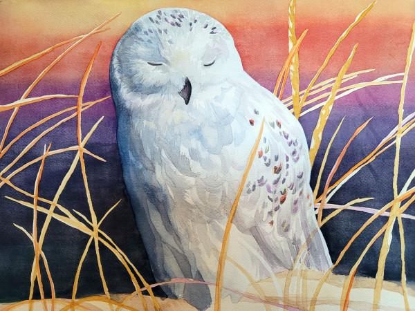 Sunrise Snowy Owl by HEIDI KIDD