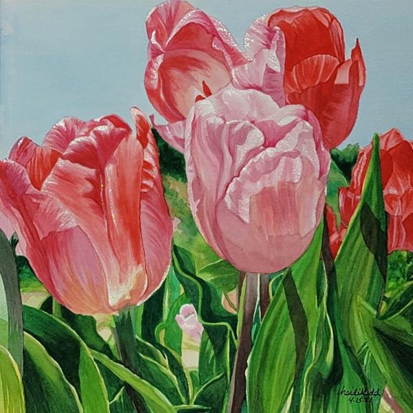 Texas Tulips by HEIDI KIDD