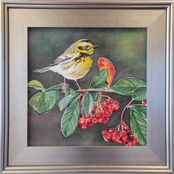Townsend Warbler by HEIDI KIDD