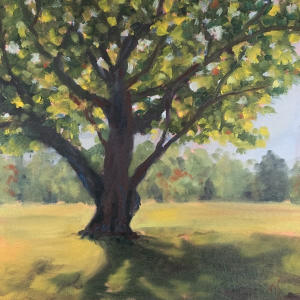 Ancient Tree at Ayr Mount (study) 36.07867N 79.0840W