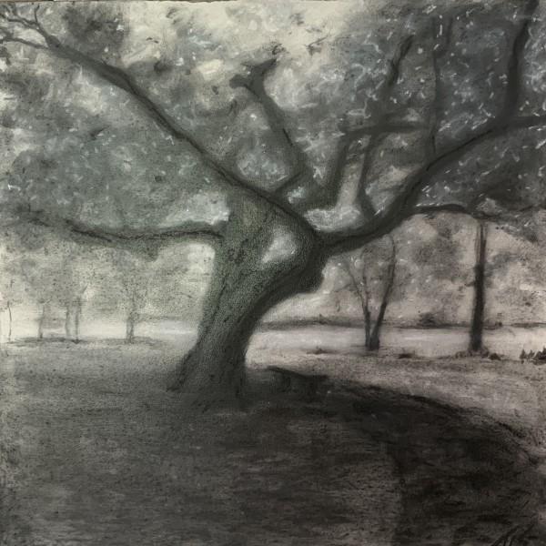 Hollow Tree Rest (study) 36.07803N 79.08378W by Thomas Stevens