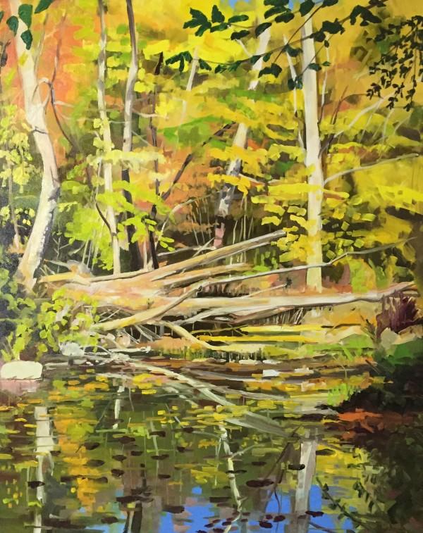 Fallen Tree Reflections by Elaine Lisle