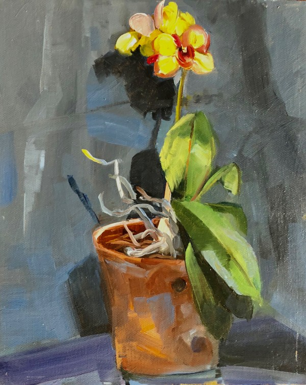 yellow orchid by Elaine Lisle