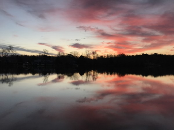Pure Pink Joy Series© - Item #3253 by Lake Orange Sunrises LLC, Lisa Francescon, Owner