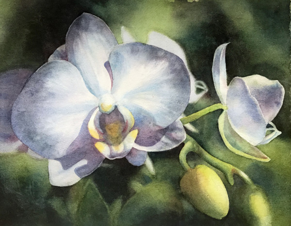 Lone Orchid by Marla Greenfield