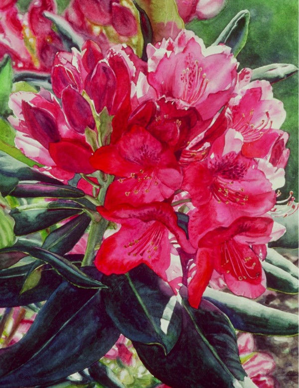 Rhodie by Marla Greenfield