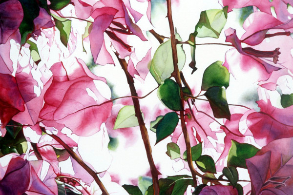 Bougainvillea by Marla Greenfield