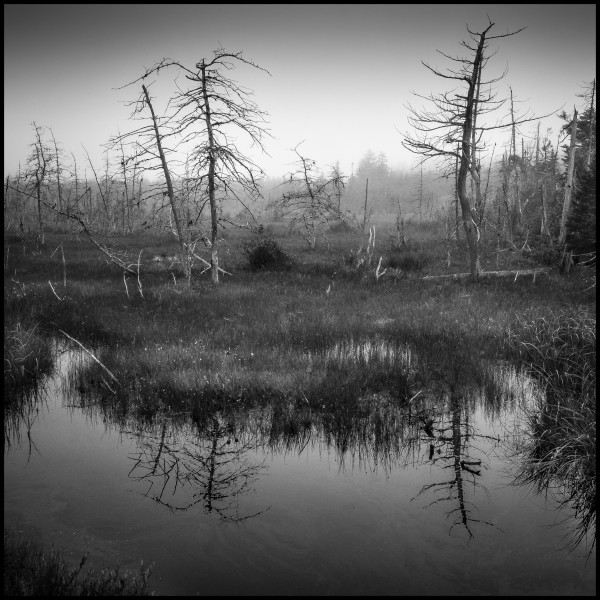 Bog, Nova Scotia by Mark Brennan