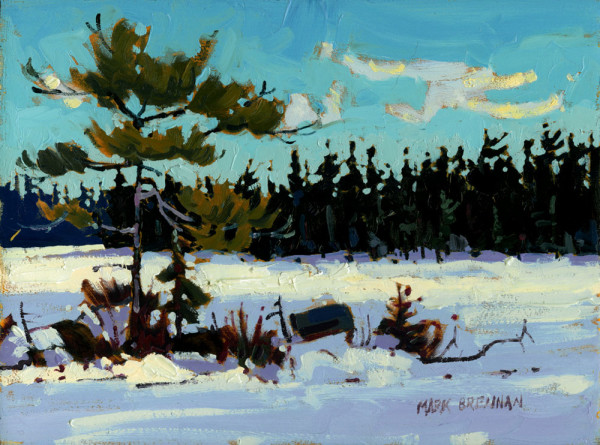 Pines At Denis Lakes, Liscomb, Nova Scotia by Mark Brennan