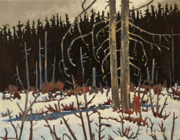 Wetland At Drydens Lake, Pictou County, Nova Scotia by Mark Brennan