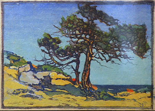 Coast Cedars by Margaret Patterson