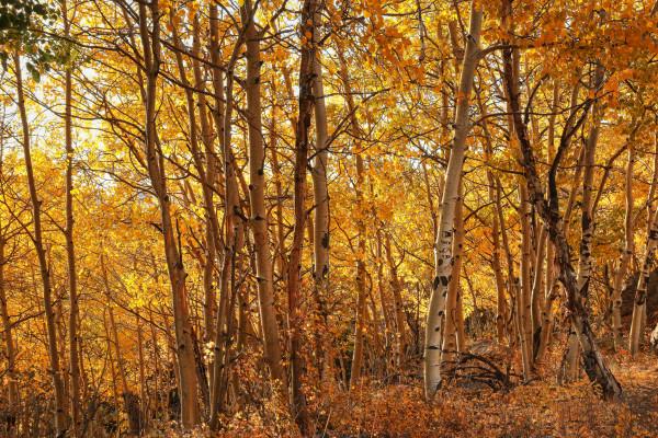 Fall Colors by Rick Perkins