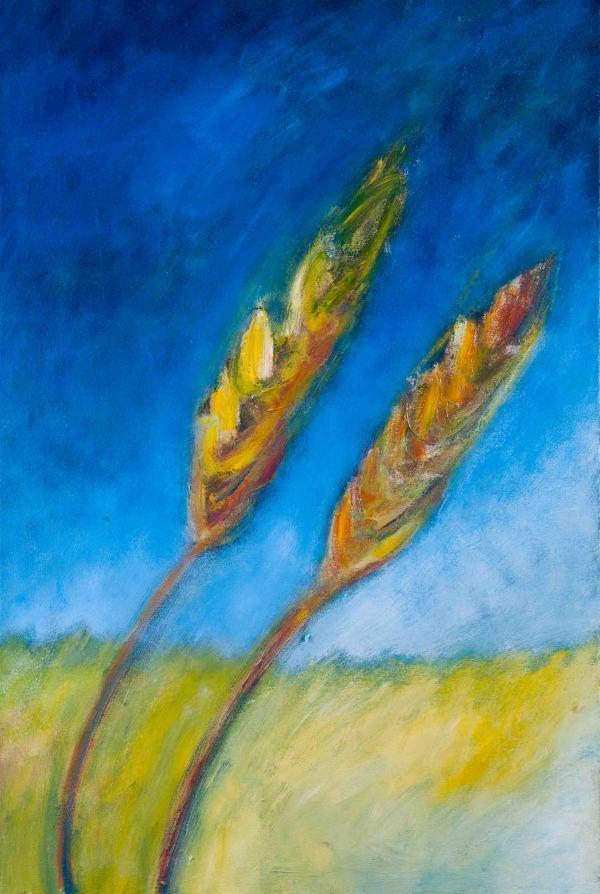 1065 Wheat by Judy Gittelsohn
