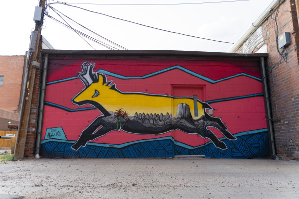 Antelope by Steve Knox and Josh Brady