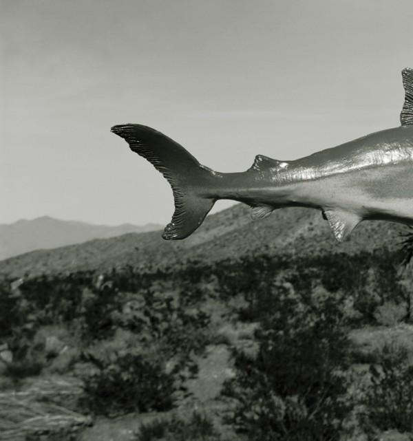 Unidentified Species, Shark: Nevada Desert by Sam Davis