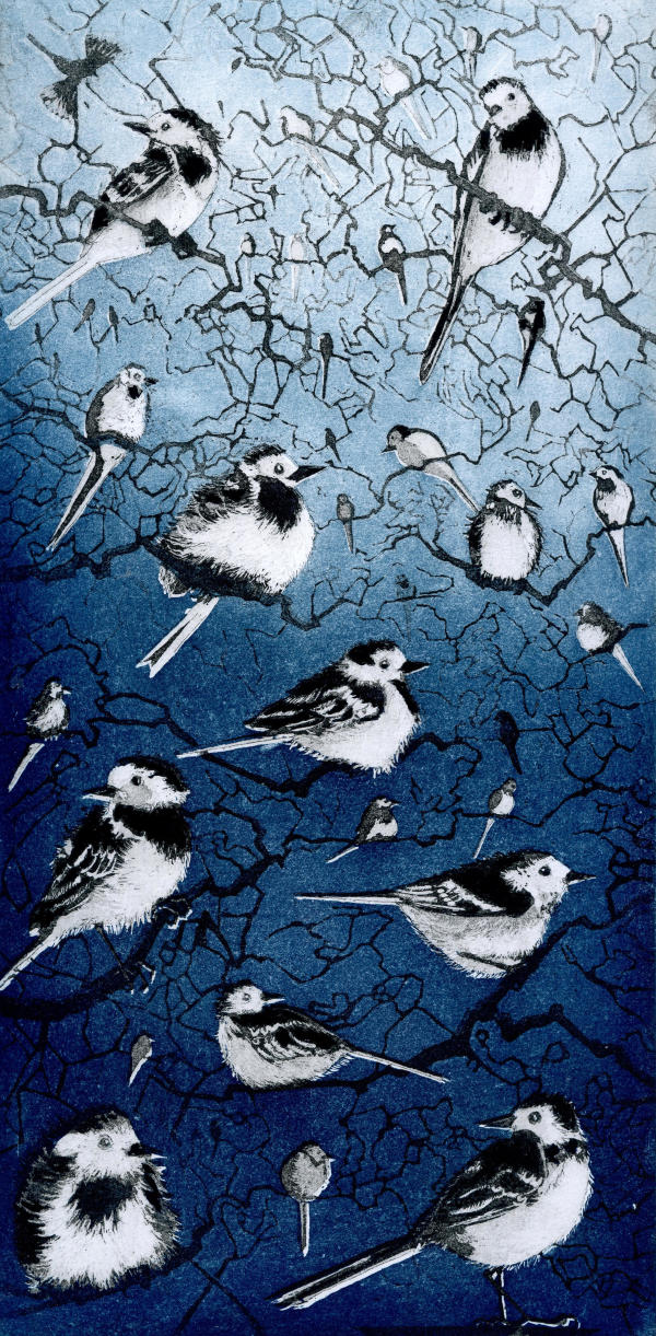 LON164, Wagtail Roost by Claire Longley