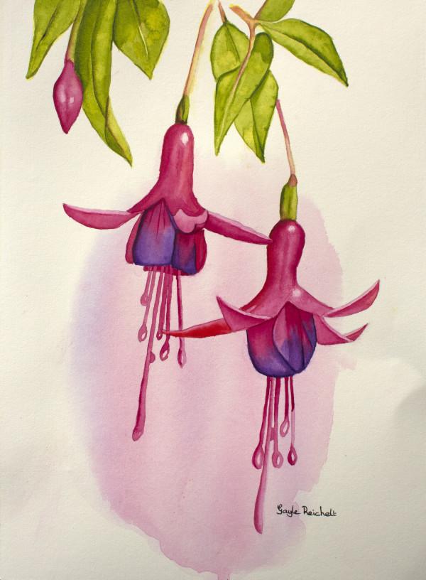 Fuchsias by Gayle Reichelt