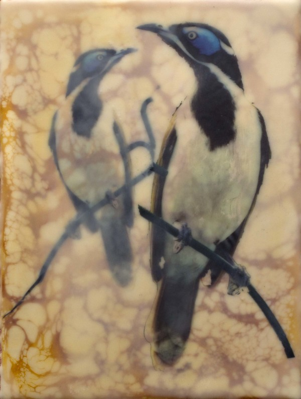 Blue Faced Honeyeaters by Gayle Reichelt