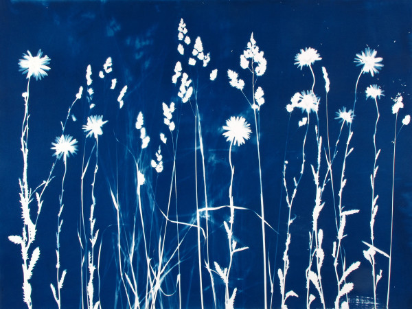 Field by Bonnie Baker