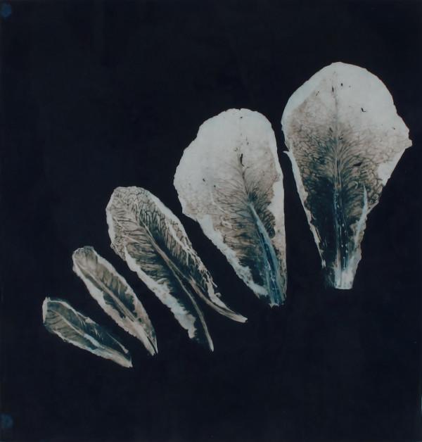 Lettuce leaning left by Bonnie Baker