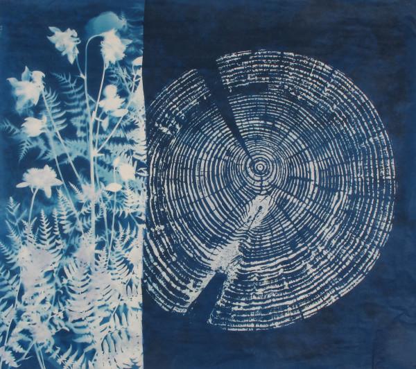 Woodland by Bonnie Baker
