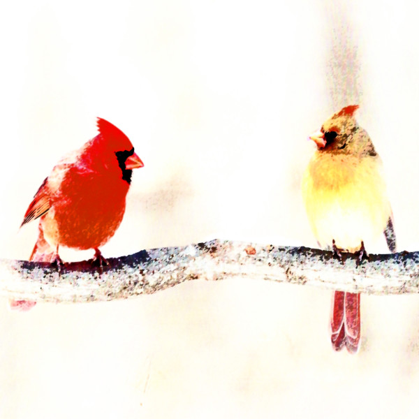 Cardinals by Gina Godfrey