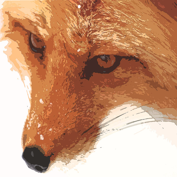Red Fox by Gina Godfrey