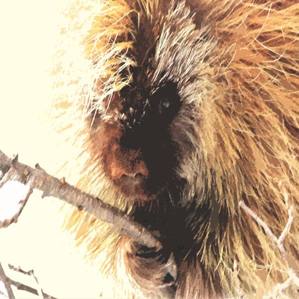 Porcupine by Gina Godfrey