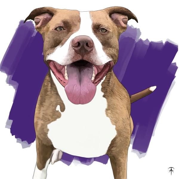 Levi Pet Portrait by Talisa Almonte