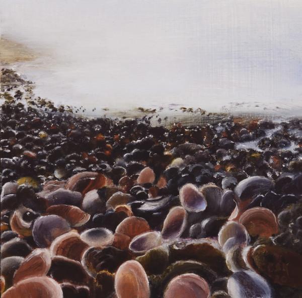 Beach of Shells - Ashqelon, Israel by Carolyn Kleinberger
