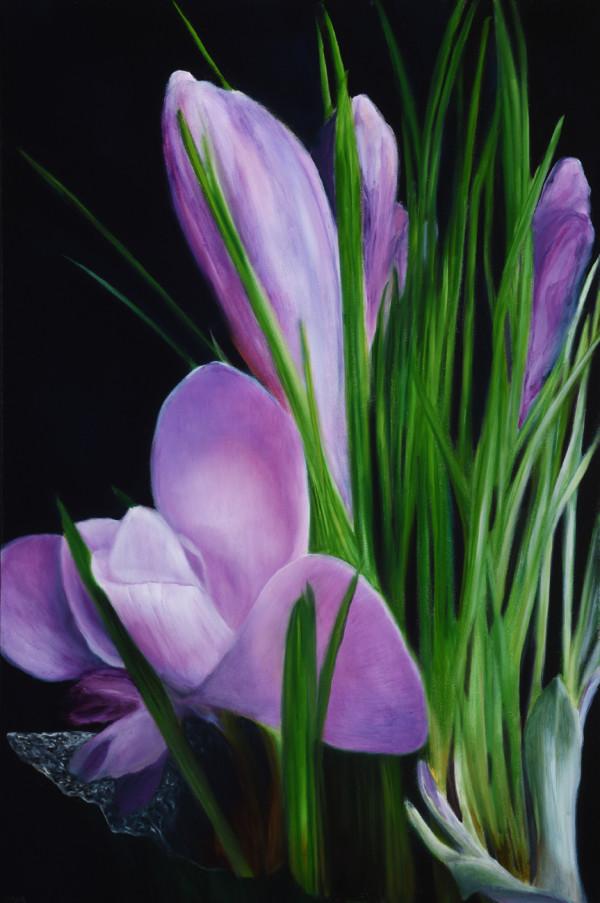 Purple Crocuses by Carolyn Kleinberger