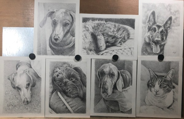 Pet Portrait Fundraiser by Hope Martin