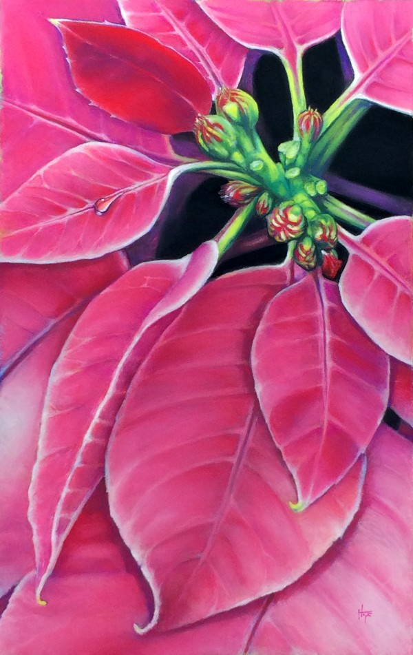 Pink Poinsettia by Hope Martin