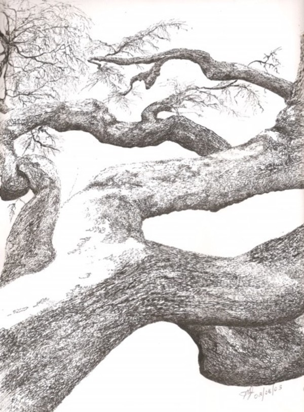 Branches Reaching by Phyllis Thomas