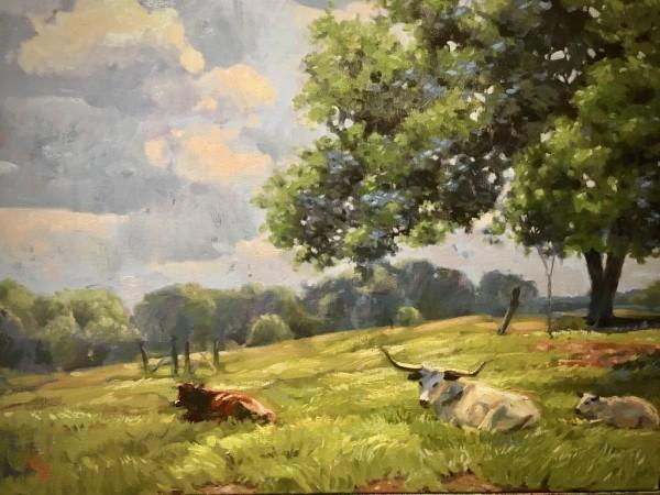 Morris Longhorns by Amy Lambrecht