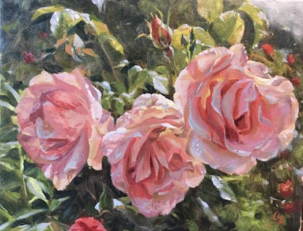 Pink Petals by Amy Lambrecht