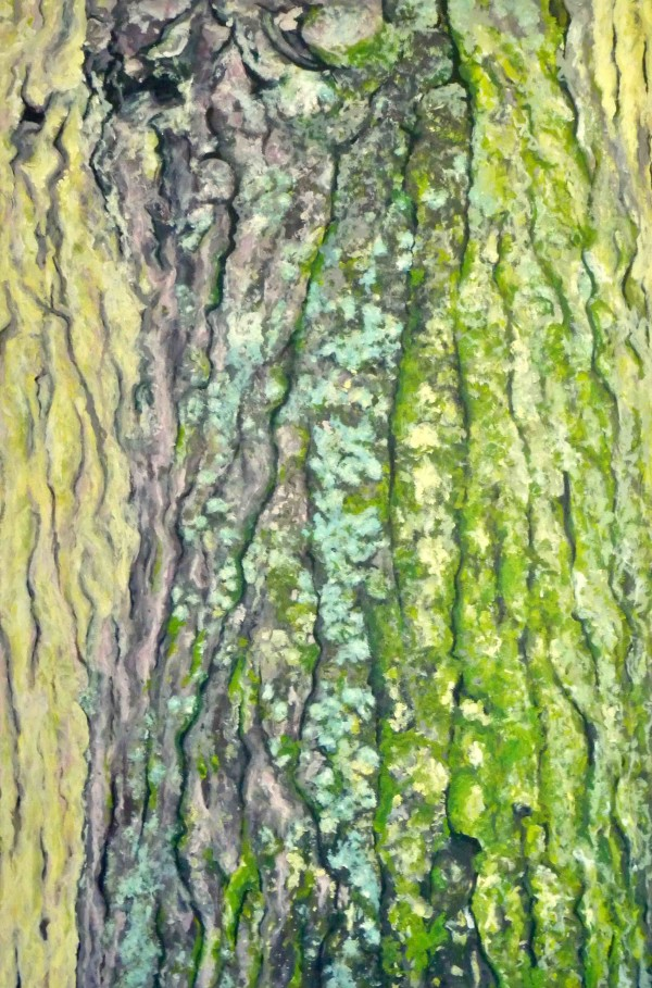 Acorn Bark by Kristina Kanders
