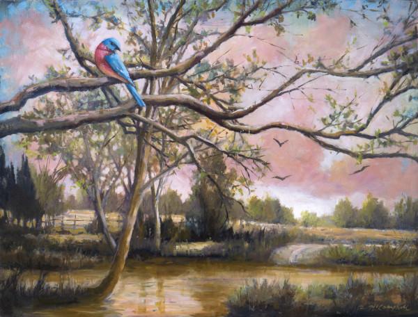 A Bluebird's Branch by Rachael McCampbell