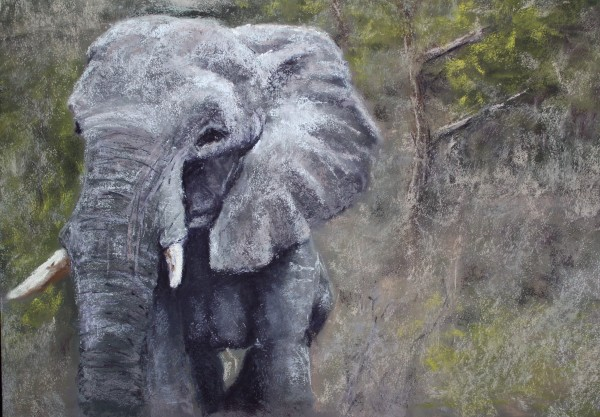 African Elephant by Renee Leopardi