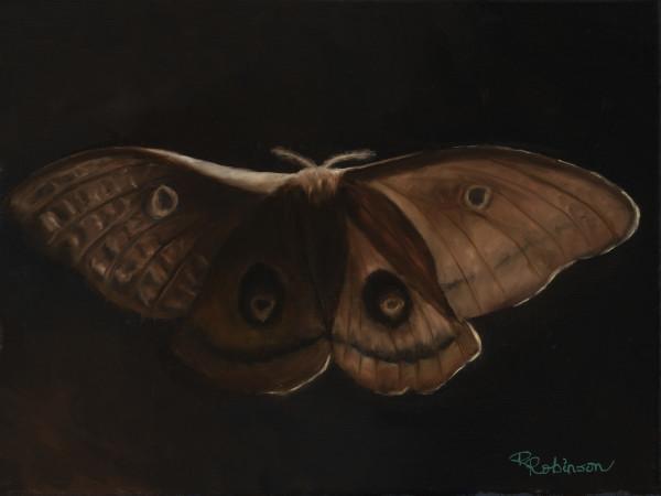 Erik's Moth by Randy Robinson