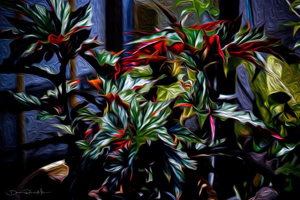 Begonia by David Randal Miller