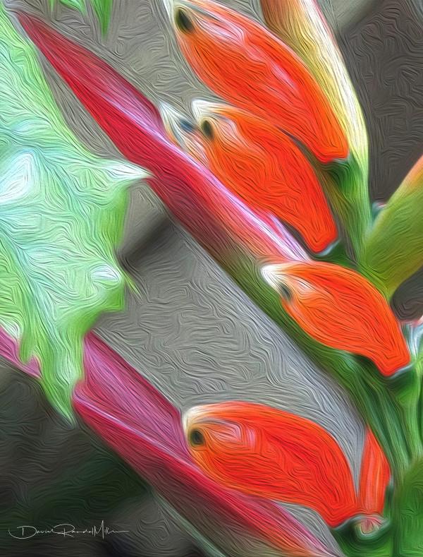 Bird Of Paradise I by David Randal Miller