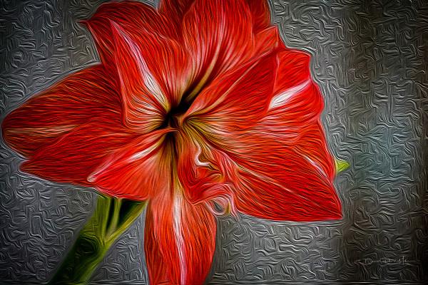 Blood Orange by David Randal Miller