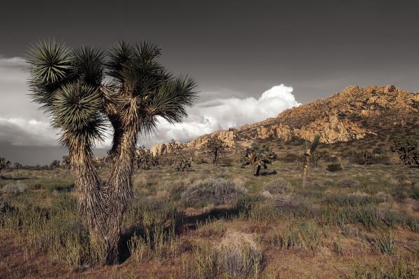 Senic Mojave Desert by Mark Peacock