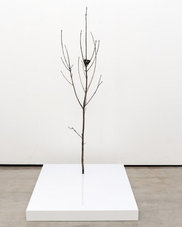 Only Tree (With Nest) by Emily Arthur